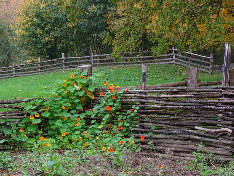 Bauerngarten Blumen Garten, Alternativ, Beauty In Nature Bio, Day Flower Grass Green Color Growth Nature No People Outdoors Tree
