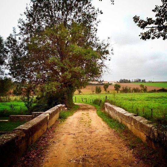 Chemin de campagne #niort Niort Igersfrance Nature_obsession Ig_captures_nature Bestnatureshots Igersniort