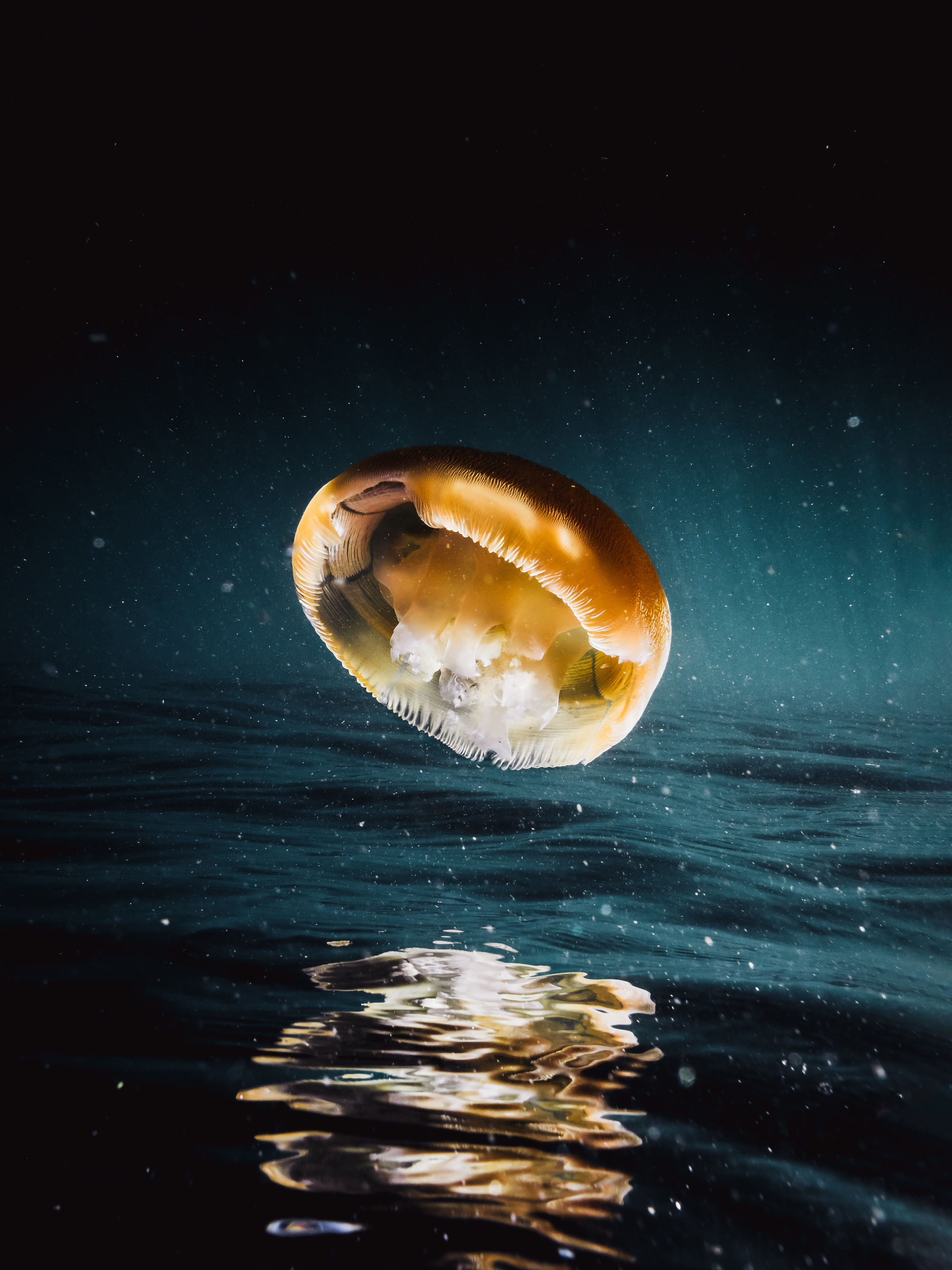 water, sea, nature, animal wildlife, one animal, animal themes, animals in the wild, animal, no people, waterfront, shell, swimming, reflection, close-up, motion, beauty in nature, marine, outdoors, invertebrate, floating on water