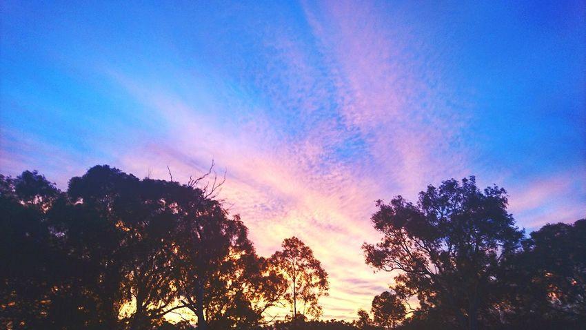 Sunset Nature Silhouette Indigo