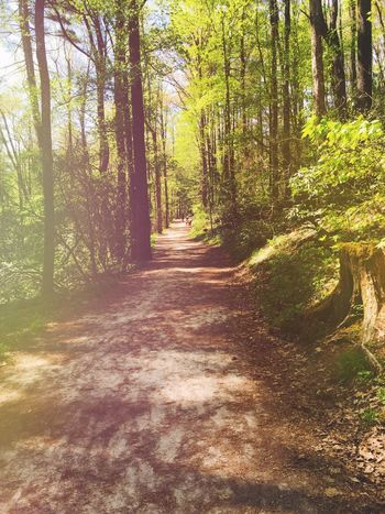 Beauty In Nature Forest Growth Landscape Nature Outdoors Scenics Sunlight Tranquil Scene Tranquility Tree