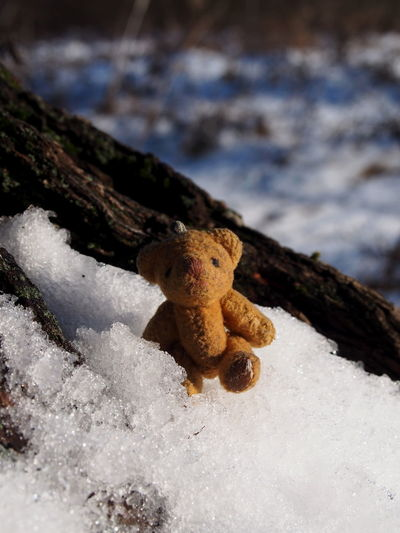 No People Nature Close-up Day Toy Focus On Foreground Snow Winter Stuffed Toy Selective Focus Cold Temperature Land Mushroom Fungus Outdoors Teddy Bear Beauty In Nature Tree Representation