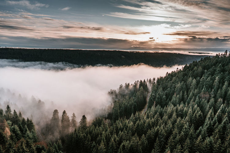 Panoramic view of forest against sky during sunset