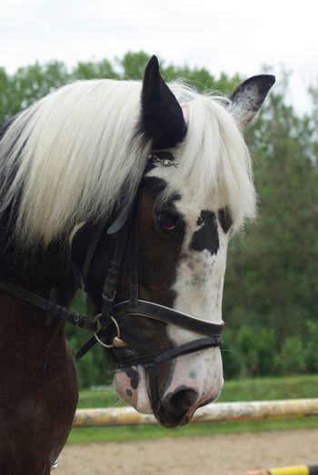 Stolz Animal Themes Livestock Animal Domestic Animals Domestic Mammal Pets Animal Head