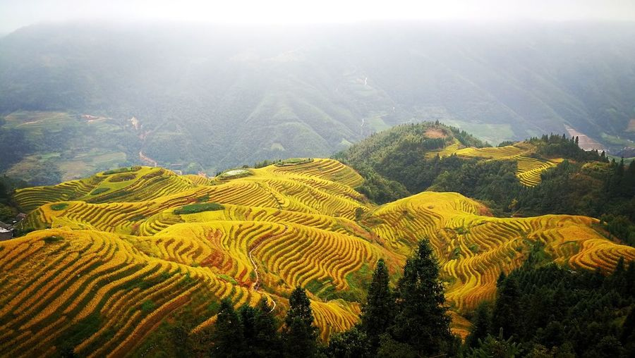 Landscape Nature Agriculture Growth Mountain Field Terraced Field Tranquil Scene No People Rural Scene Autumn Yellow Stairs China EyeEmNewHere Lost In The Landscape