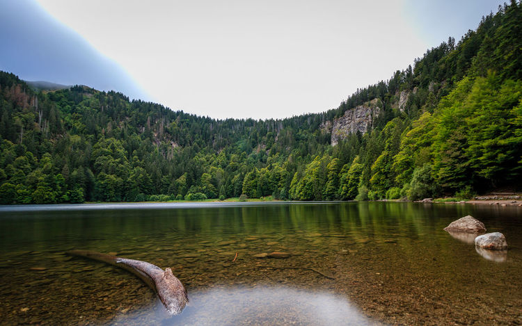 Der Feldsee im Schwarzwald Schwarzwald Beauty In Nature Black Forest Day Feldsee Forest Lake Mountain Nature No People Outdoors Scenics Sky Tranquility Tree Water