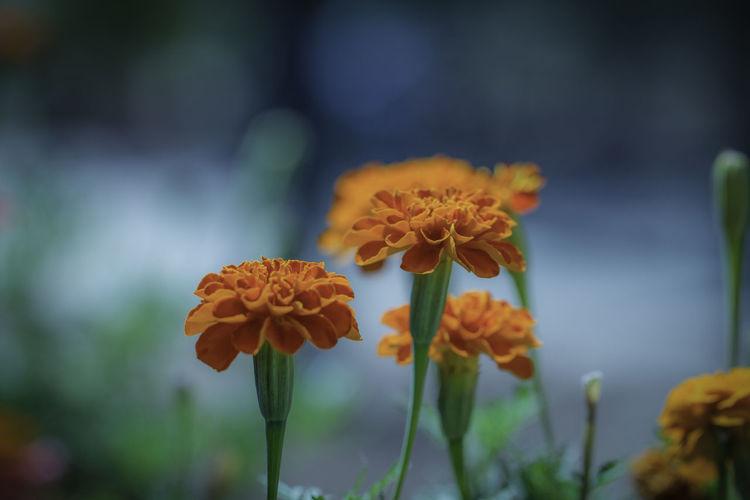 floral Flora