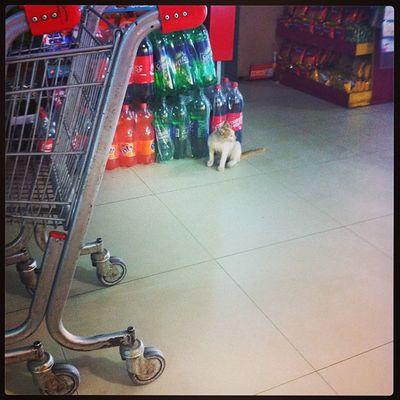 neighbourhood cat doing groceries...