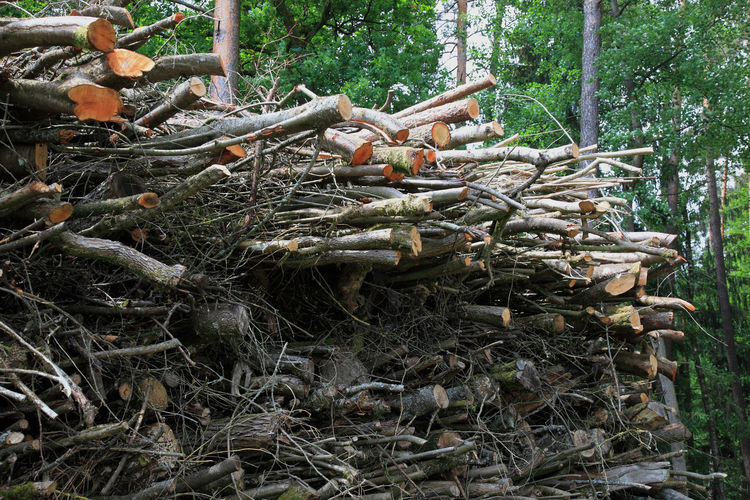 A large pile of wood waste at the forestry is waiting for the shredder Firewoods Day Deforestation Environmental Issues Field Firewood Firewood Stack Forest Growth Land Large Group Of Objects Log Nature No People Outdoors Plant Stack Timber Tranquility Tree Wood Wood - Material WoodLand
