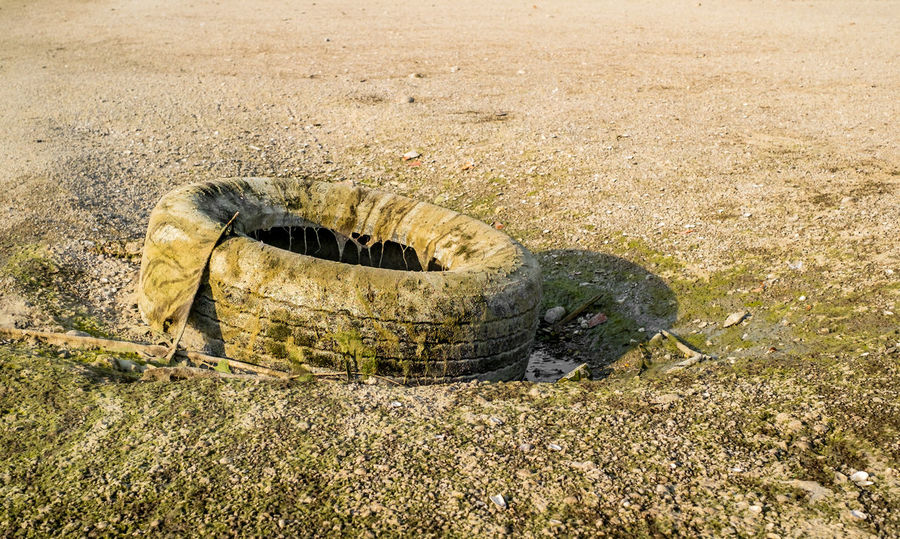 An old car tire covered with algae polluting the beach Polution Is All Around The World Animal Themes Animal Wildlife Animals In The Wild Car Tire Day Garbage Grass Mammal Nature No People Old Car Tire Old Tires One Animal Outdoors Poluted Earth Polution Polution Is Everywh Reptile Tire Tire Track