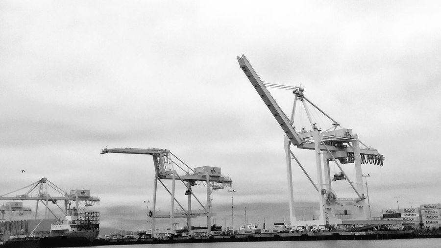 Cranes at the