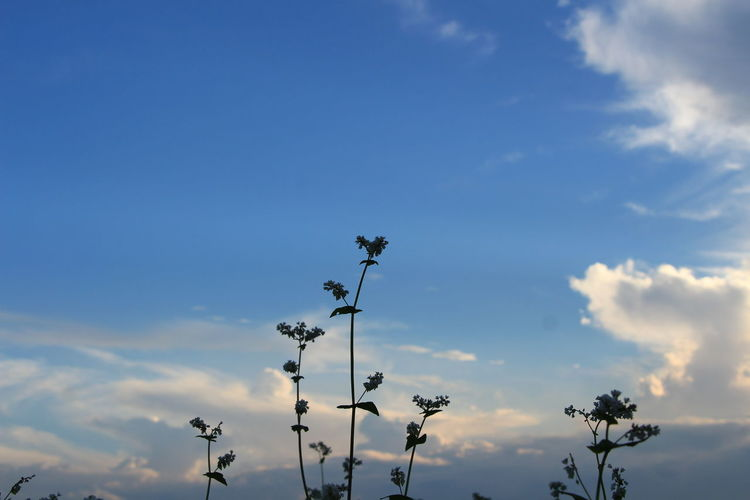 Low angle view of flowers against cloudy sky