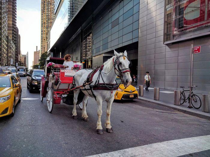 Central Park - NYC Central Park Horse Horse Cart Horse And Carriage Carriage Carriage Ride Contradiction Contradictions Transportation Smartphones Smartphone Smart Phone Feminism