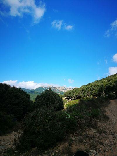 Panoramic View Panoramic Landscape Sardinia Sardegna Italy  Sardinia Sardegna Tree Mountain Sky Cloud - Sky Landscape Growing