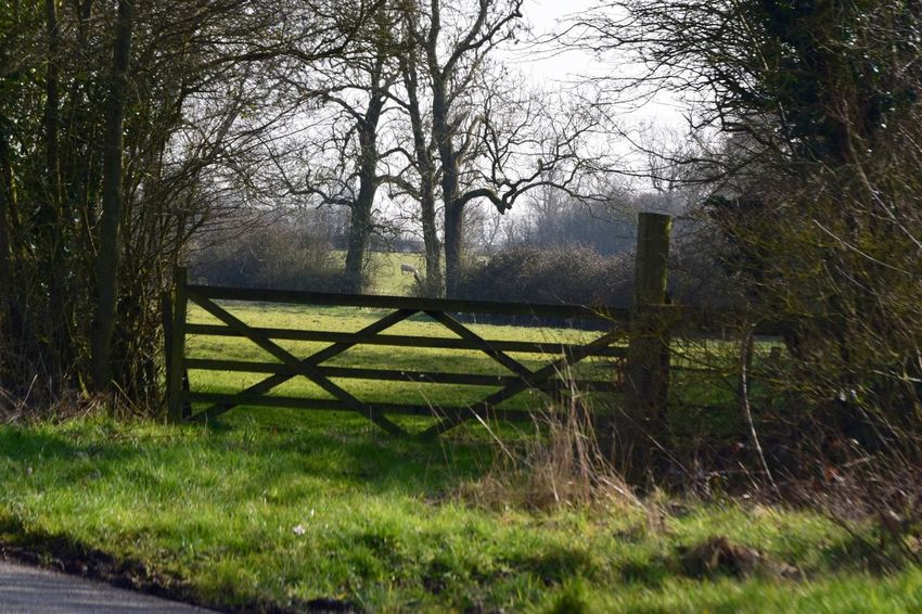 Taking Photos Trees Hedges Field Sheep Five Bar Gate Countryside Uk Country Shots Nikond3300