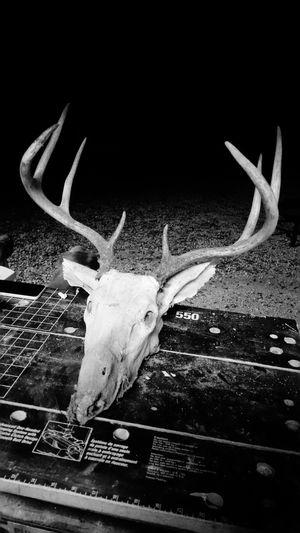 Deer Archery Food