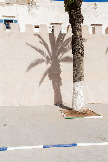 Shadow of palm tree on retaining wall in city