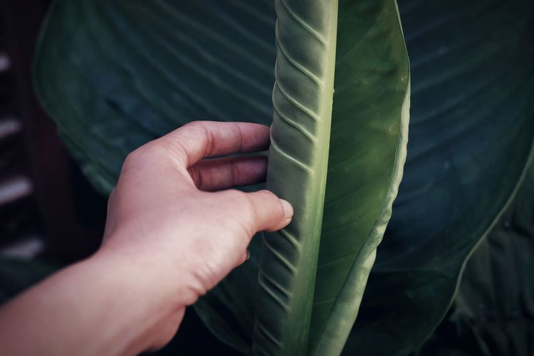 Cropped hand holding palm leaf