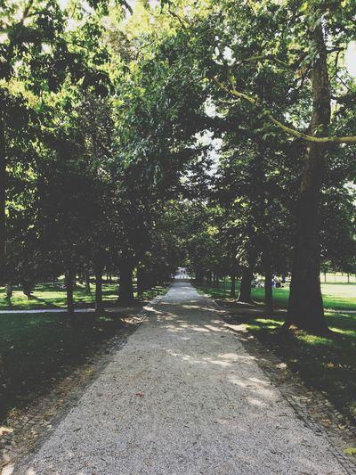 Tree The Way