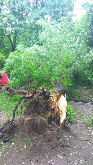 ураган в москве Day Outdoors No People Tree Москва ураган дерево деревья