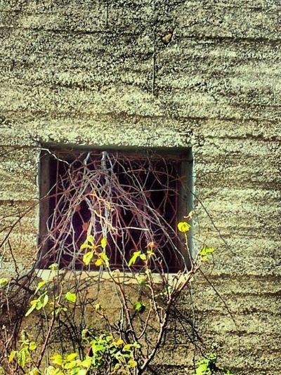 Secret Garden Light And Shadow Natural Pallete ♡♡ Old But Gold