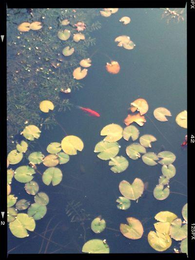 Little fish??