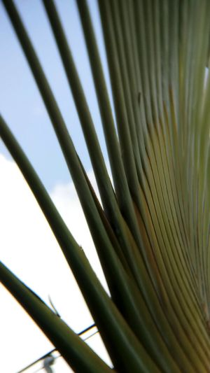Close-up Day Freshness Frond Nature No People Outdoors Palm Leaf Palm Tree