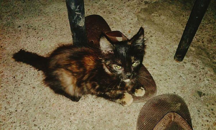 Angrycat BLackCat Greeneyes Mybaby