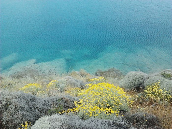 High Angle View Of Yellow Flowers By Sea