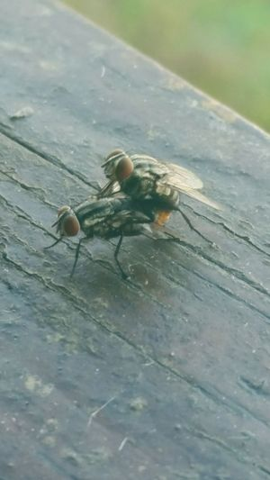 Flys Mating Nature Funny LOL Giggle Outdoors Outside Focus Check This Out Fall Autumn Deck Porch Enjoying Life Life Humor Humorous