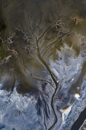 Water in a strangled talings dam slowly weaves its way through dead trees creating an abstract tree pattern from the air. Week On Eyeem Aerial View Aerial Photography Drone  Drone Photography Australia Mining High Angle View Dji Mavic Pro 2 Satellite View Backgrounds Oil Spill Full Frame Textured  Close-up Abstract Backgrounds Abstract Natural Pattern Rippled Leaf Vein Textured Effect