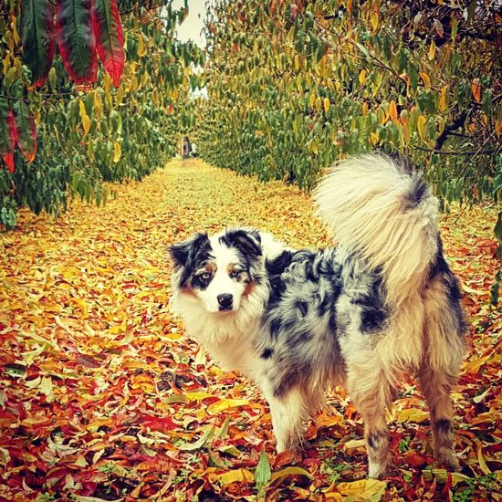 Colors Dog Tranquil Scene Beauty In Nature Nature Autumn🍁🍁🍁 Domestic Animals Ilgiardinodicasa Garden