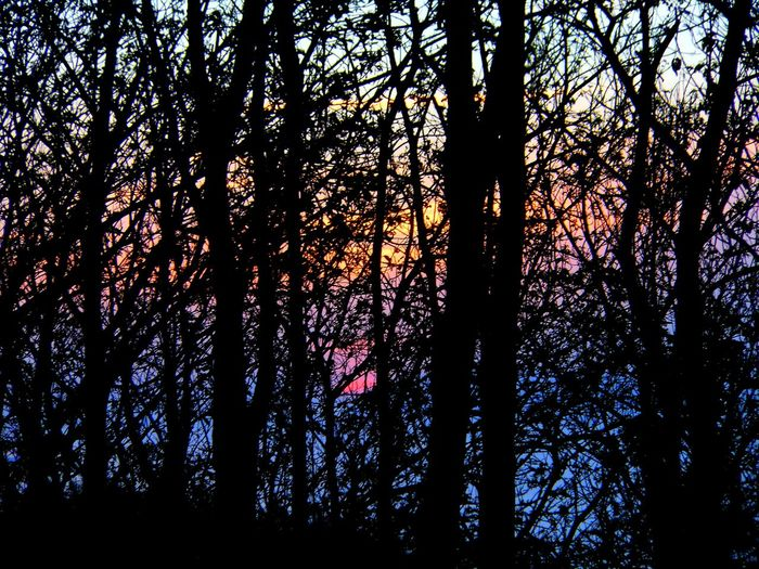 Low angle view of silhouette trees in forest