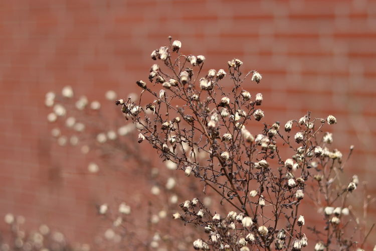 Close-up of wilted plant against wall