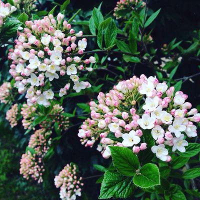 Blossom Spring Flowers Springtime