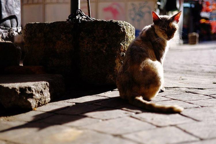 EyeEm Selects Domestic Animals Animal Themes One Animal Pets Shadow Sunlight Day Domestic Cat No People Outdoors Mammal