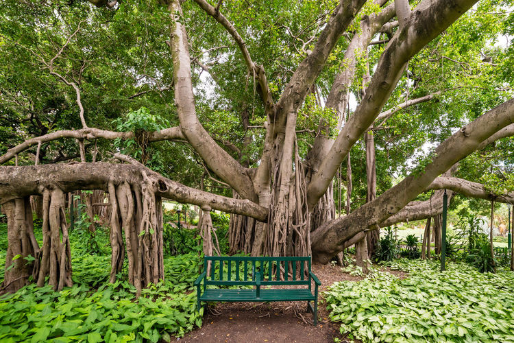 A green park bench in front of a large banyan tree Beauty In Nature Bench Branch Day Empty Footpath Green Color Growth Lush Foliage Nature No People Non-urban Scene Outdoors Park Park - Man Made Space Plant Relaxation Scenics Solitude Tourism Tranquil Scene Tranquility Tree Tree Trunk Vacations