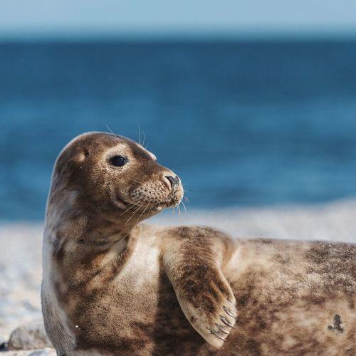 Seal at beach looking away