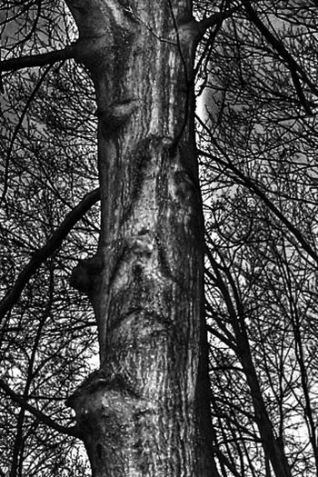 TreePorn_Collection CAN YOU SEE THE Creepy Face Black_white Collection