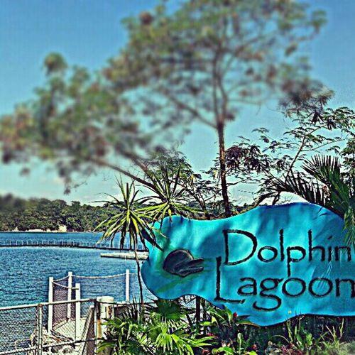 Sea and dolphins. FUN-TASTIC ! Nurses Oceanadventure Teambmcer Dolphins