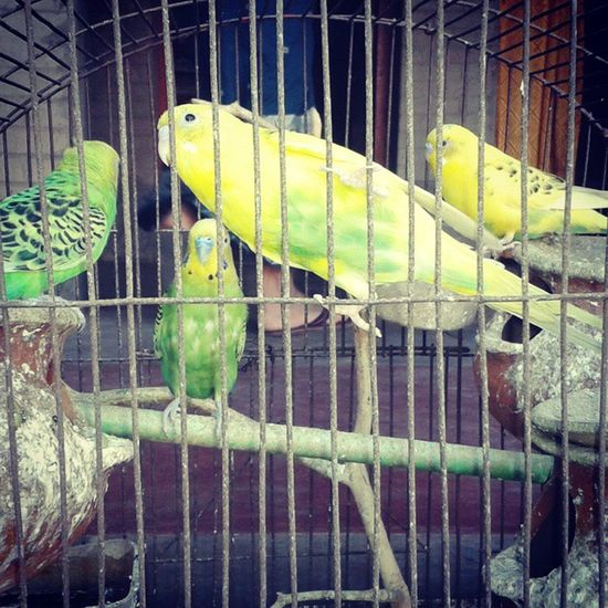 Good Morning Birds Cage Instaday Instaclick Photo_of_the_day PhotoShare Follow4follow Click4likes Comments Daystart Rsphotography .