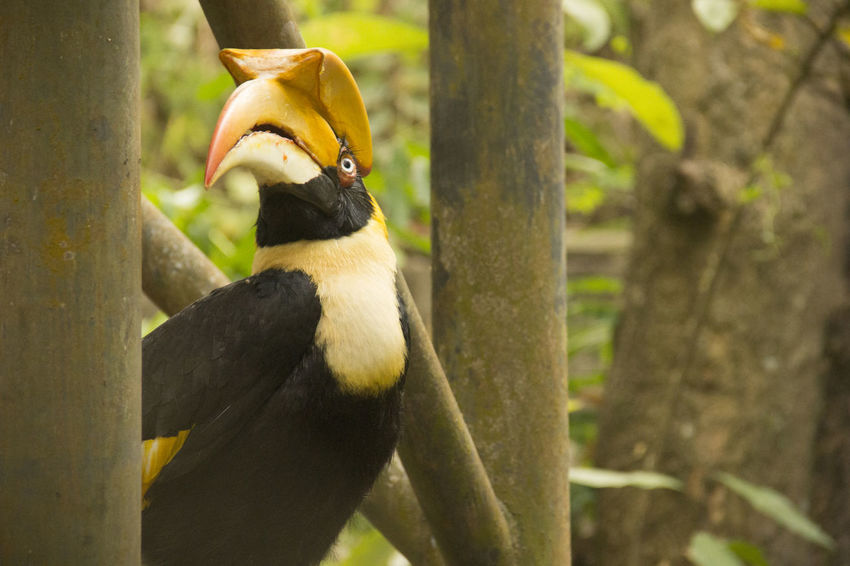 Hornbill Bird Bird Photography Zoo Animals  Zoophotography Black Hornbill Animal One Animal Outdoors Plant