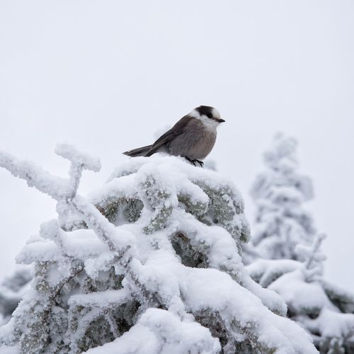 Bird perching on snow against sky