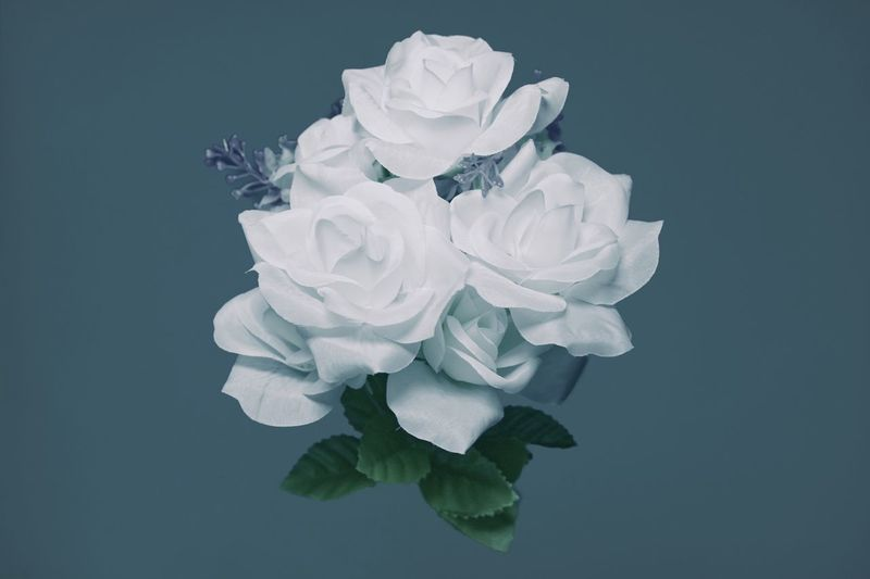 Fewer colors for a change of pace Premium Mood Blue Still Life Design Fake Flowers Flower White Color Indoors  No People Plant Studio Shot Blue Flower White Color Indoors  No People Plant Studio Shot Blue Flower