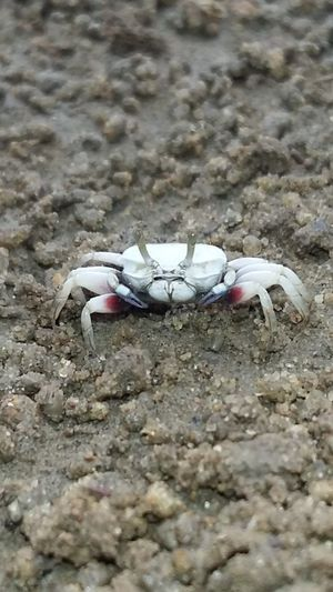Crab Beach Sand Outdoors Day Animal Themes Close-up India Animal Wildlife One Animal Insect Photography Beauty In Nature Insect Crab On The Beach Crabshell Sea View Low Tide Crabs!! Crab Pots Crab Legs The Week On EyeEm