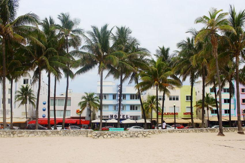 Architecture Art Deco Art Deco Architecture Beach Green Color Miami Beach Palm Tree PALMTREES 🌴🌴🌴 Sunny Tree