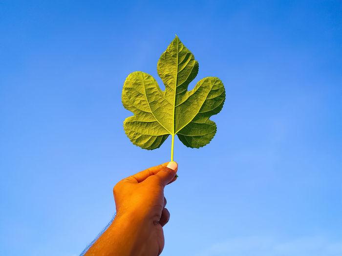 Hand holding leaves against blue sky