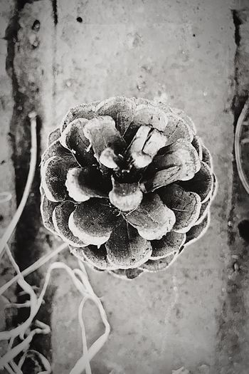 Pine Cone Close-up From Above  Downward View Blackandwhite Black & White No People Nature Outdoors