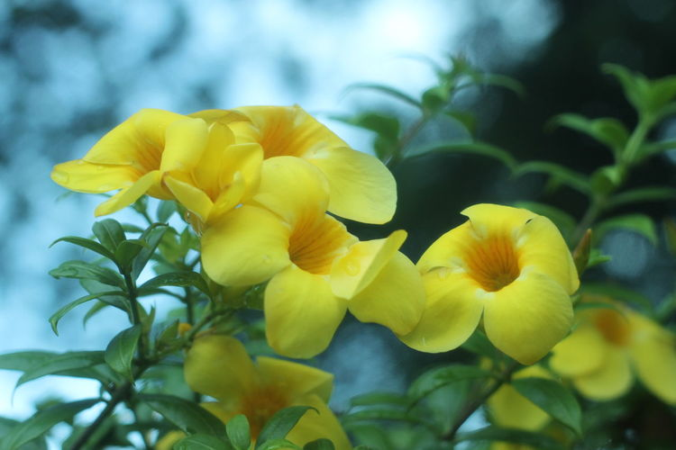 Flower Flowering Plant Yellow Plant Fragility Beauty In Nature Vulnerability  Freshness Petal Inflorescence Growth Flower Head Close-up Plant Part Leaf Nature No People Day Focus On Foreground Selective Focus Outdoors Spring