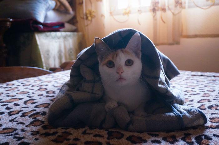 Delicious Burrito 🌯 🐈 😋 Cute Cozy Cozy Place Cozy At Home Cozytime Cozy Moments Warm Pets Portrait Bedroom Cat Cats Cat Lovers Cat Lover Beautiful Beauty Love Those Eyes Nose Family Pet Cat Portrait Pet Portrait